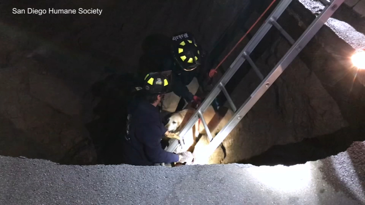 A golden retriever had to be rescued after she fell into a sinkhole in San Diego Tuesday.