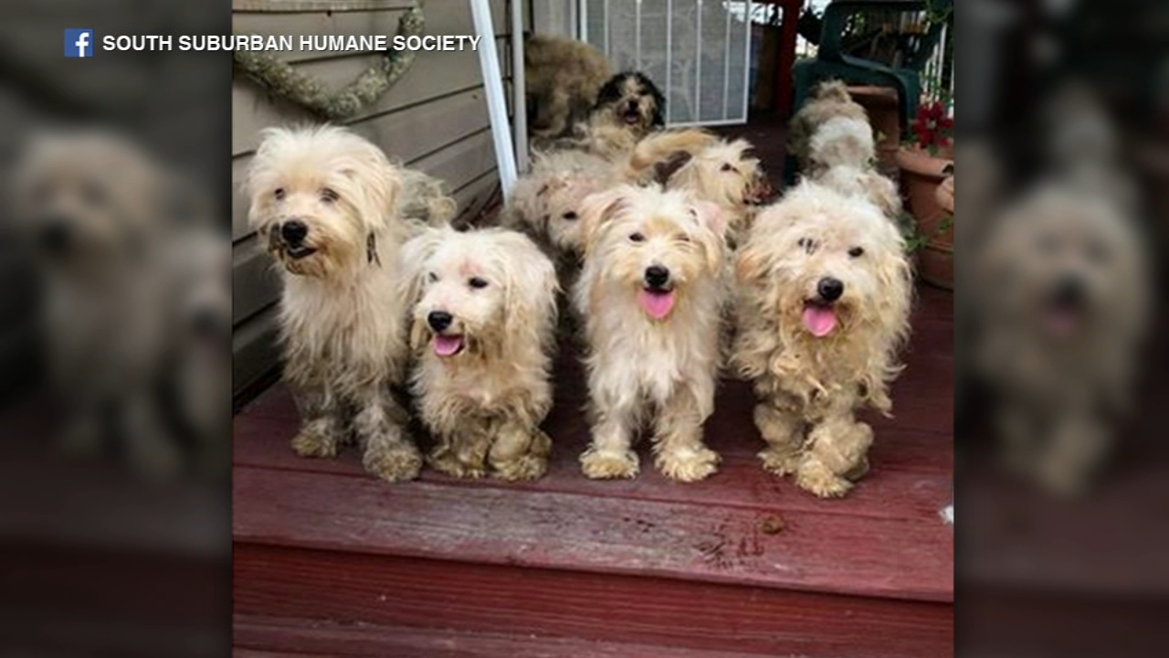 22 dogs, 2 chickens rescued from house in Harvey