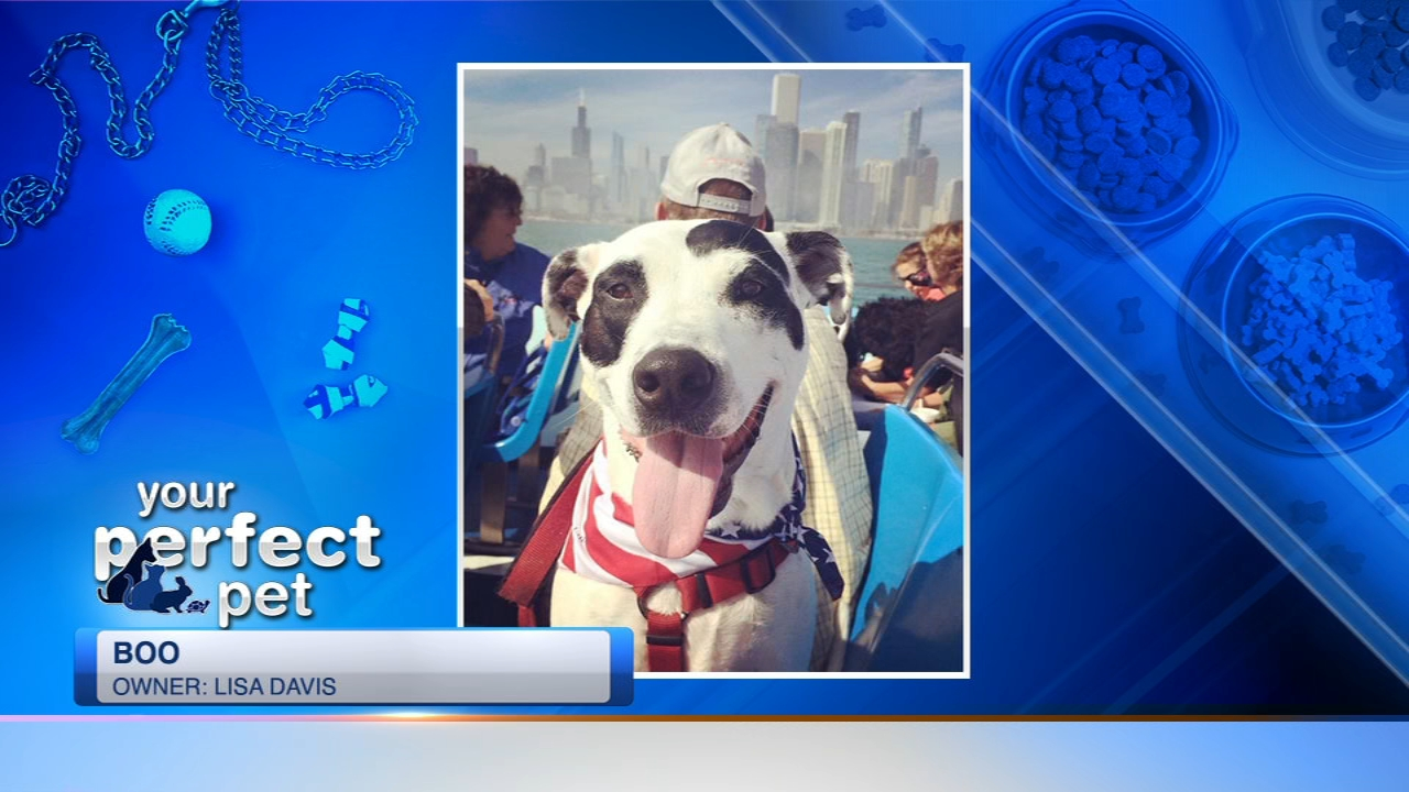 This weeks Perfect Pets include dogs Blanca and Boo.