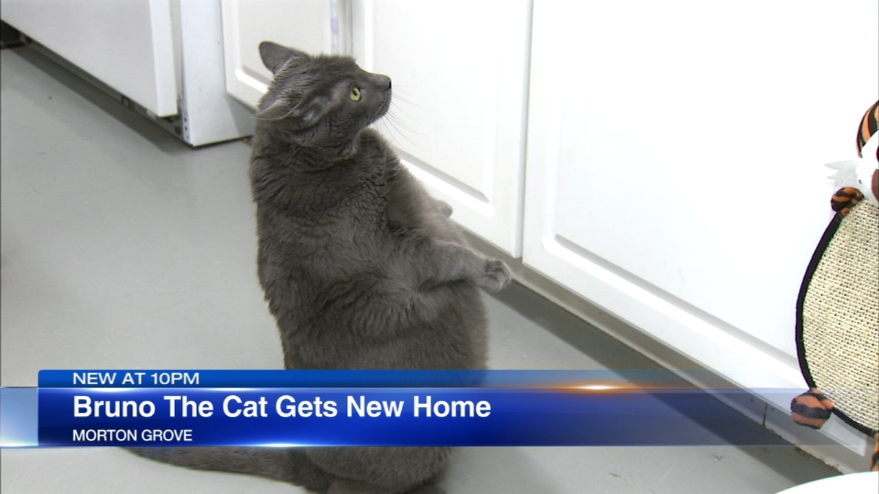 After worldwide interest Bruno the cat has a new home.