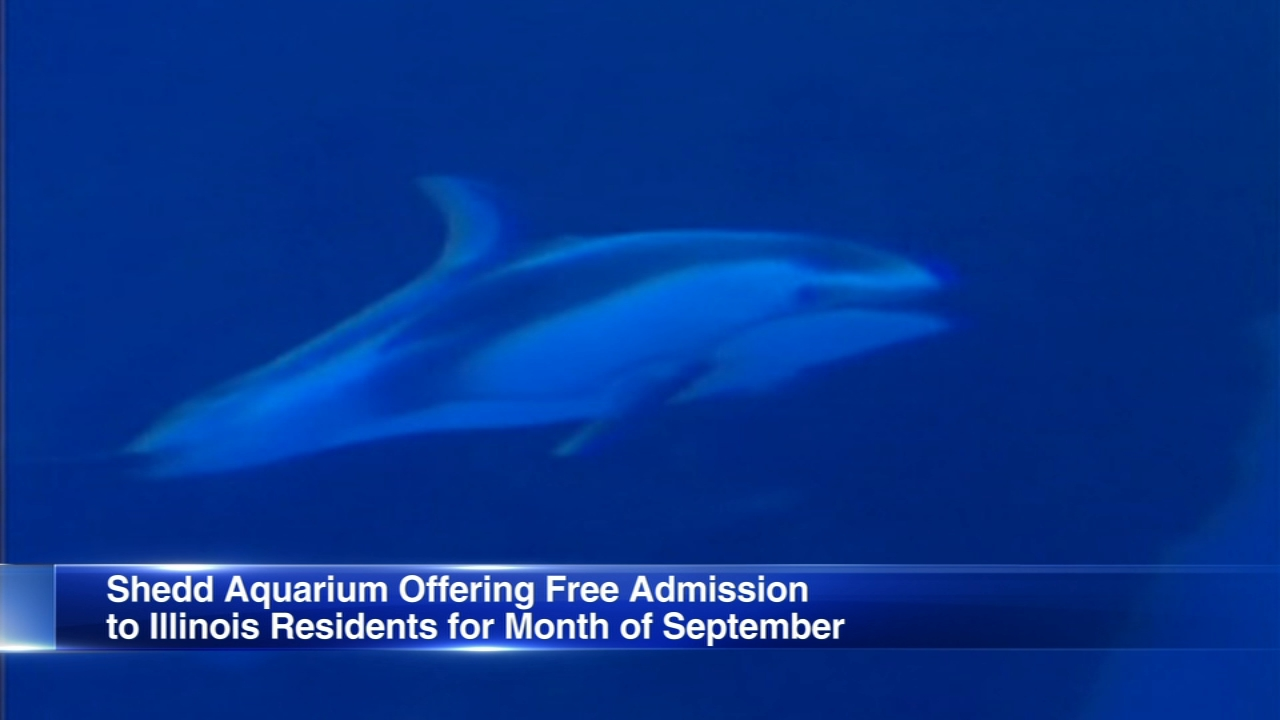 Illinois residents get free admission to Shedd Aquarium in September.
