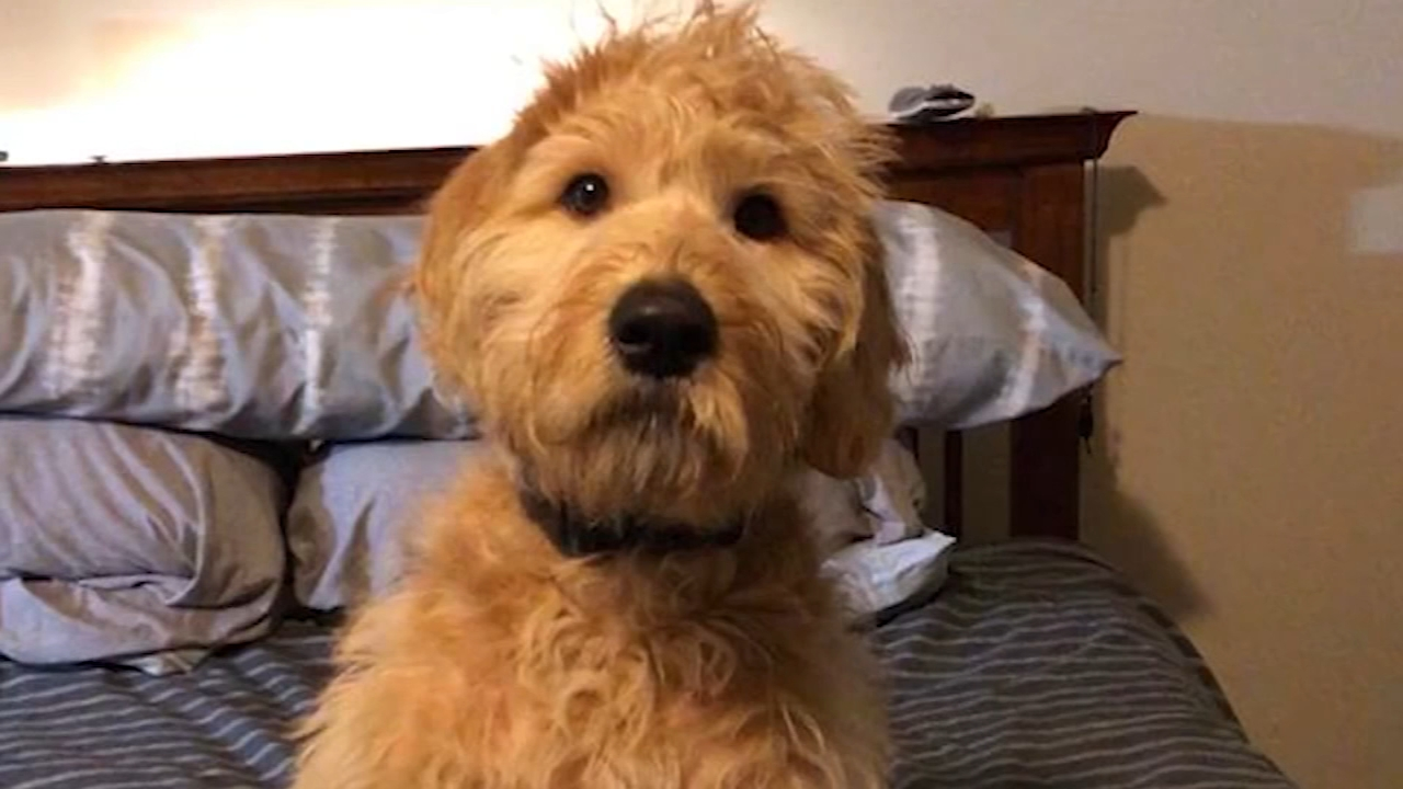 A Las Vegas shooting survivor says his neighbor shot and killed the comfort dog he adopted after the attack.