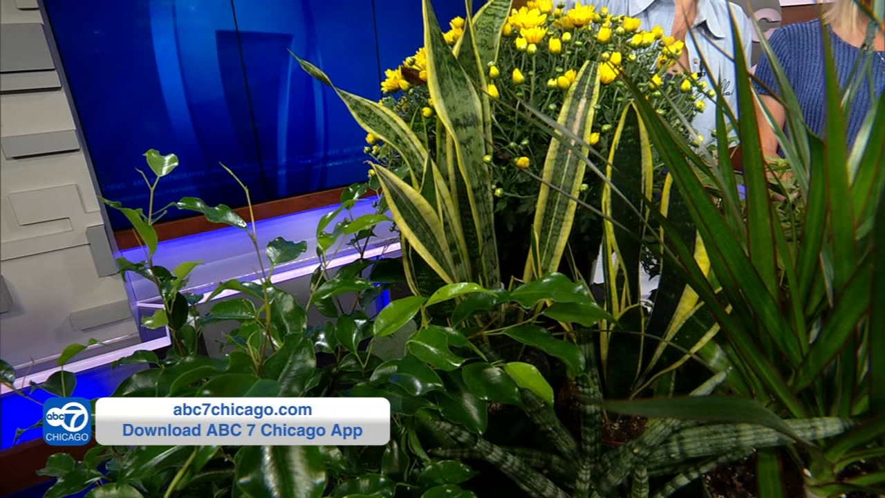 Houseplants can be beneficial to your health.