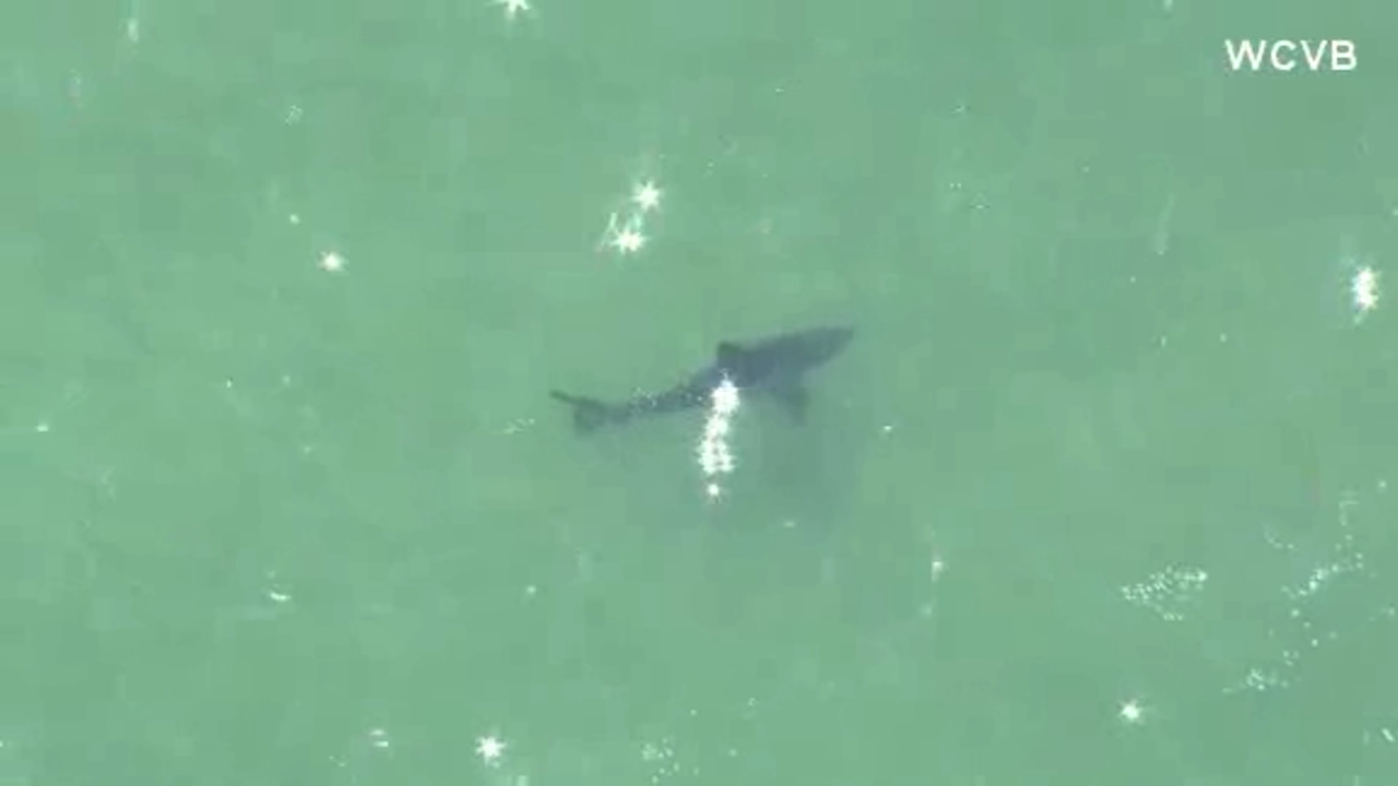 A man died after a shark attack of Cape Cod.