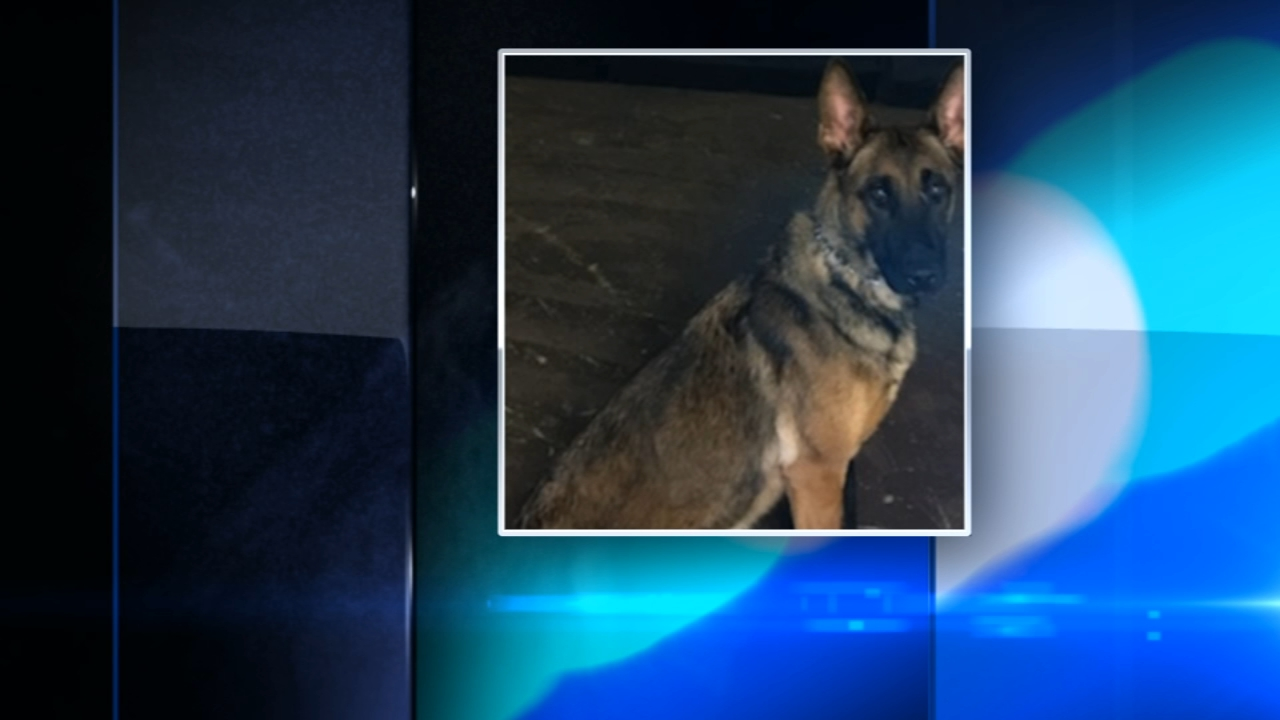 A Portage, Indiana, police K9 has been relieved of duty after she killed another dog at Bacon Fest on Saturday.