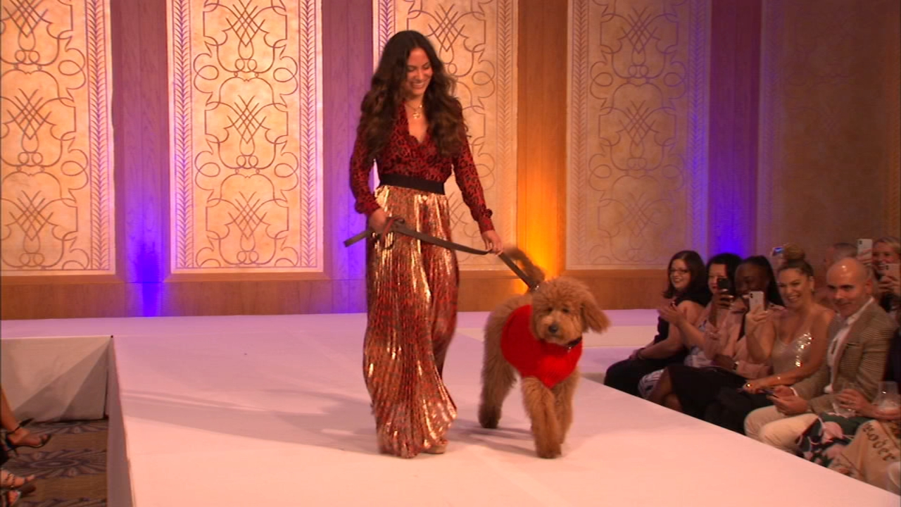 Dogs strutted their stuff Thursday night at the Haute Dogs fashion show.