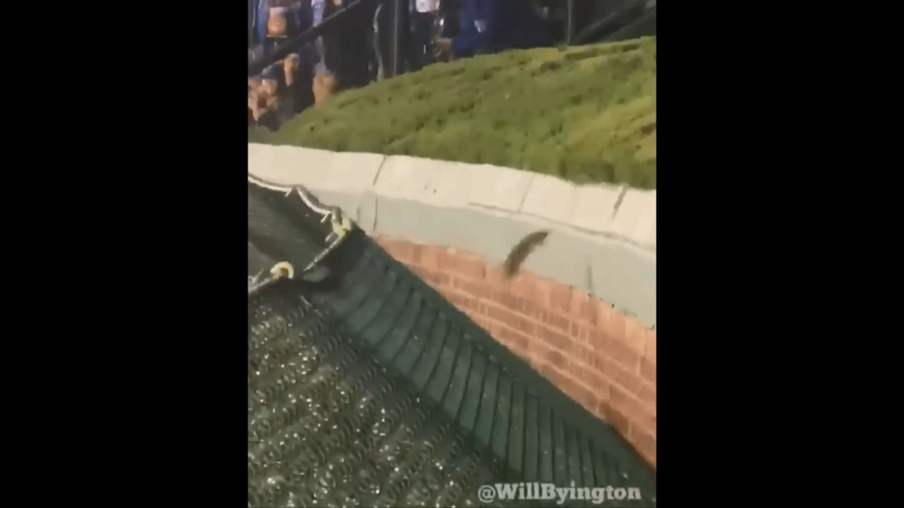 Tuesdays 6-0 loss to the Pittsburgh Pirates didnt give Cubs fans much to cheer about, but one unsuspecting rodent became the star of the show with an underdog story for the ages.
