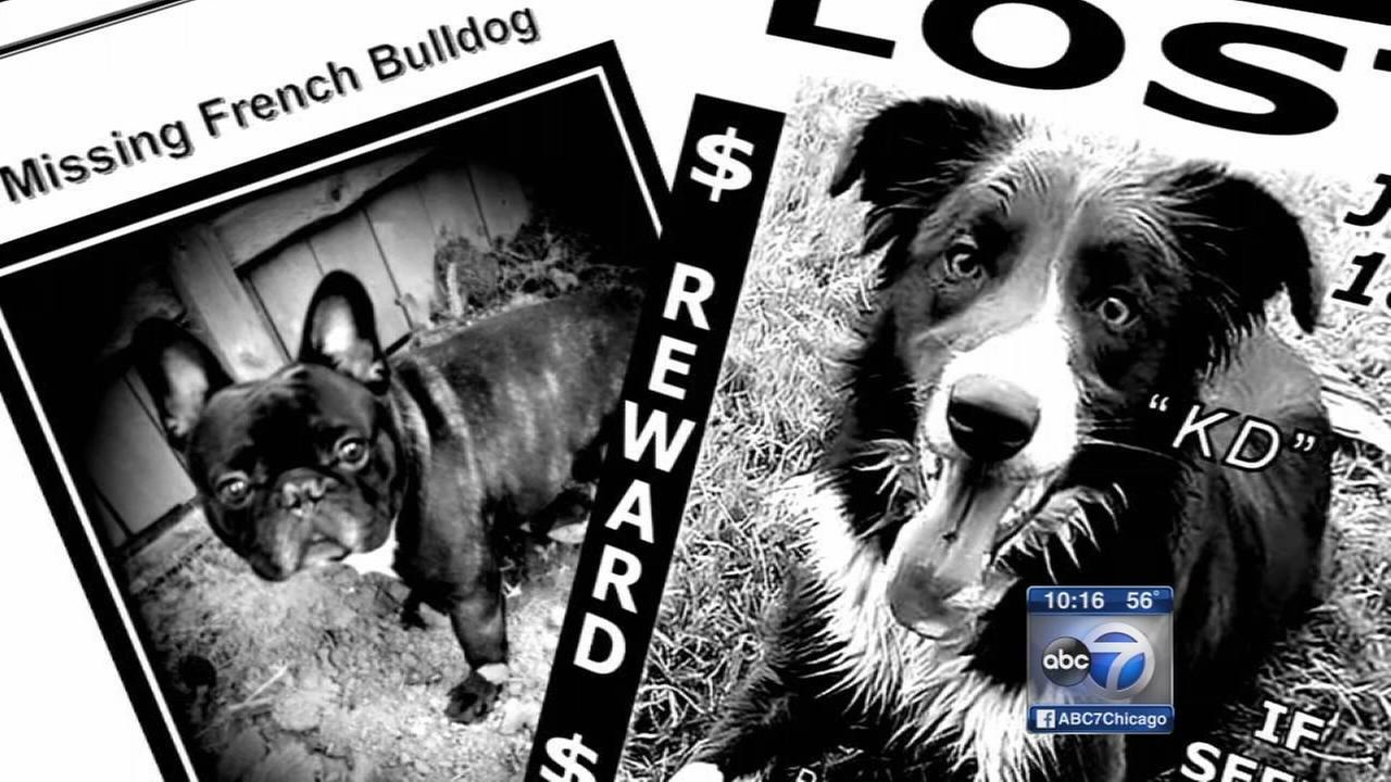 I-Team uncovers missing dog complaints