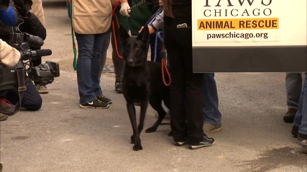 Dogs and cats affected by Hurricane Michael arrived in Chicago from Florida Wednesday morning.