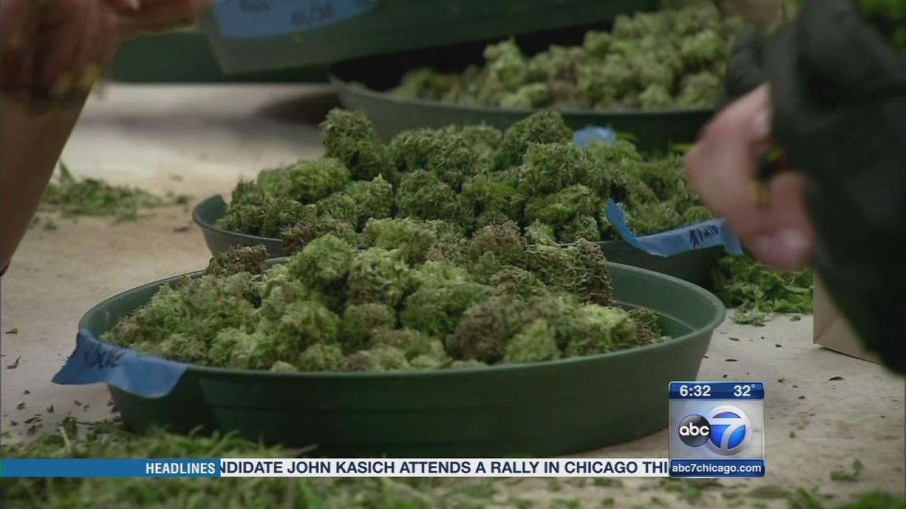 Medical marijuana sales start Monday in Illinois