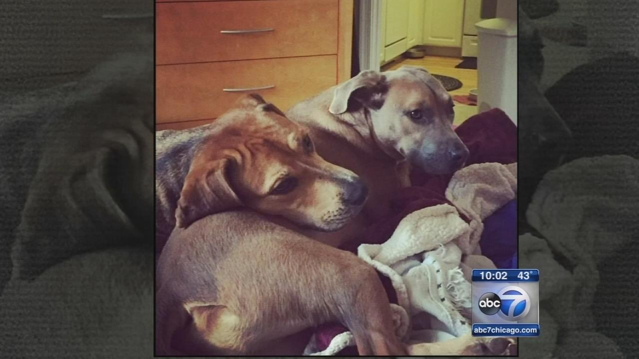Rescue dogs killed in possible arson