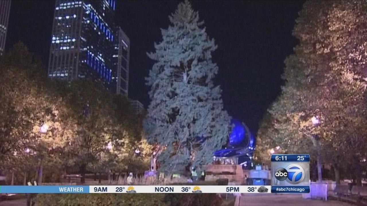 chicago christmas tree lighting tuesday in millennium park
