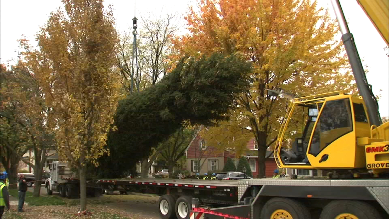 Chicago has selected its 105th Christmas tree. A 60-foot Norway Spruce was donated by Deborah Orth and her family from west suburban Elmhurst.