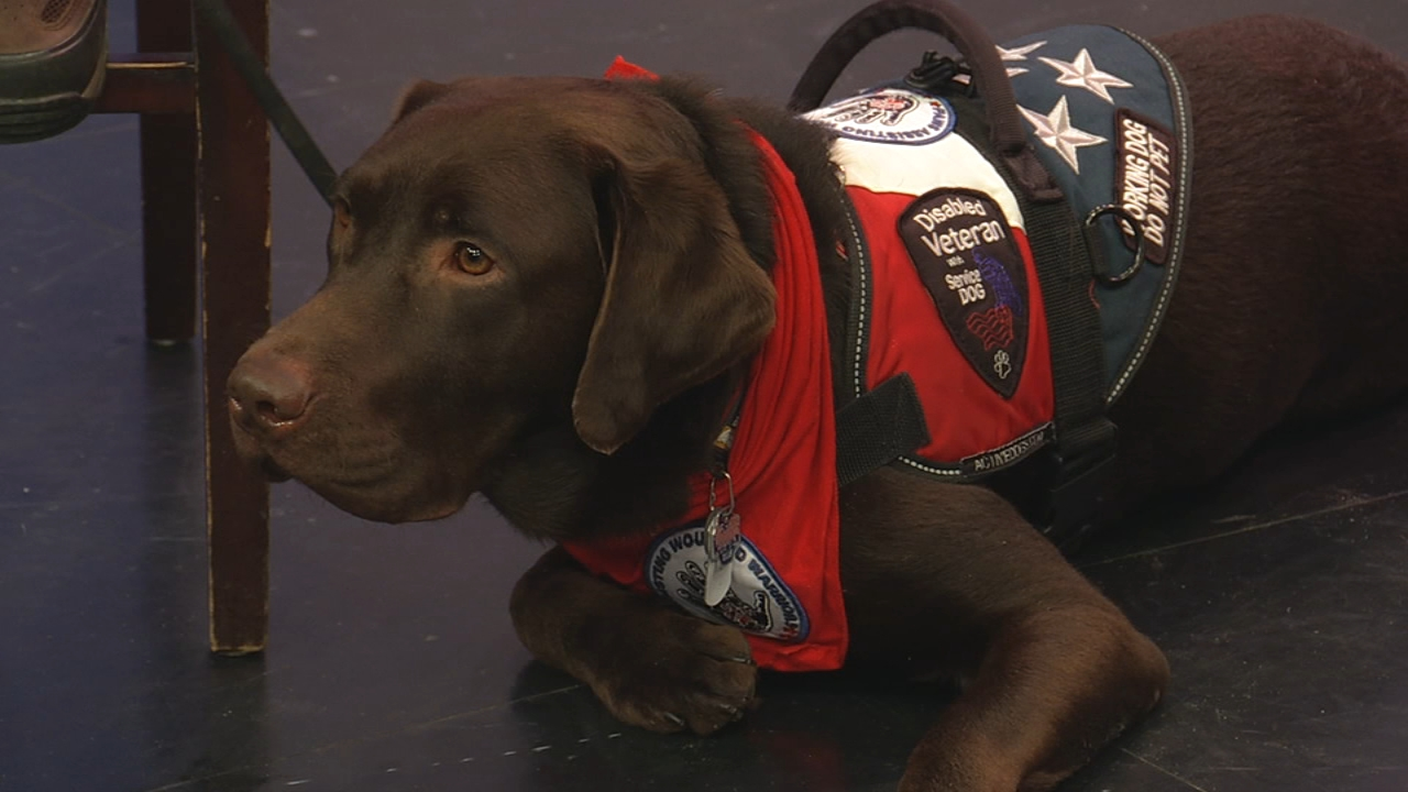 Paws Assisting Wounded Warriors, or PAWWS is making Chicago proud.