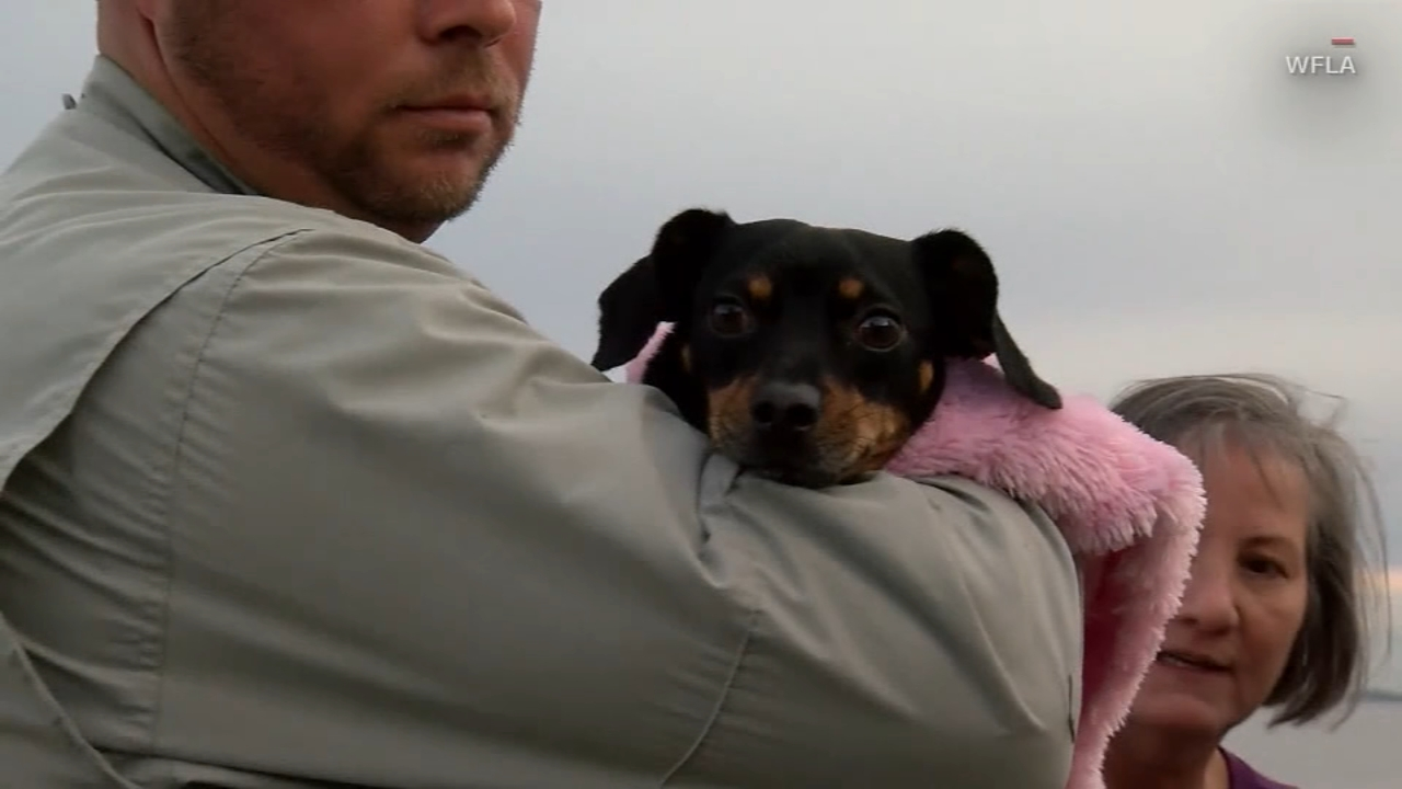 A dachsund is doing well after a close call in Florida.