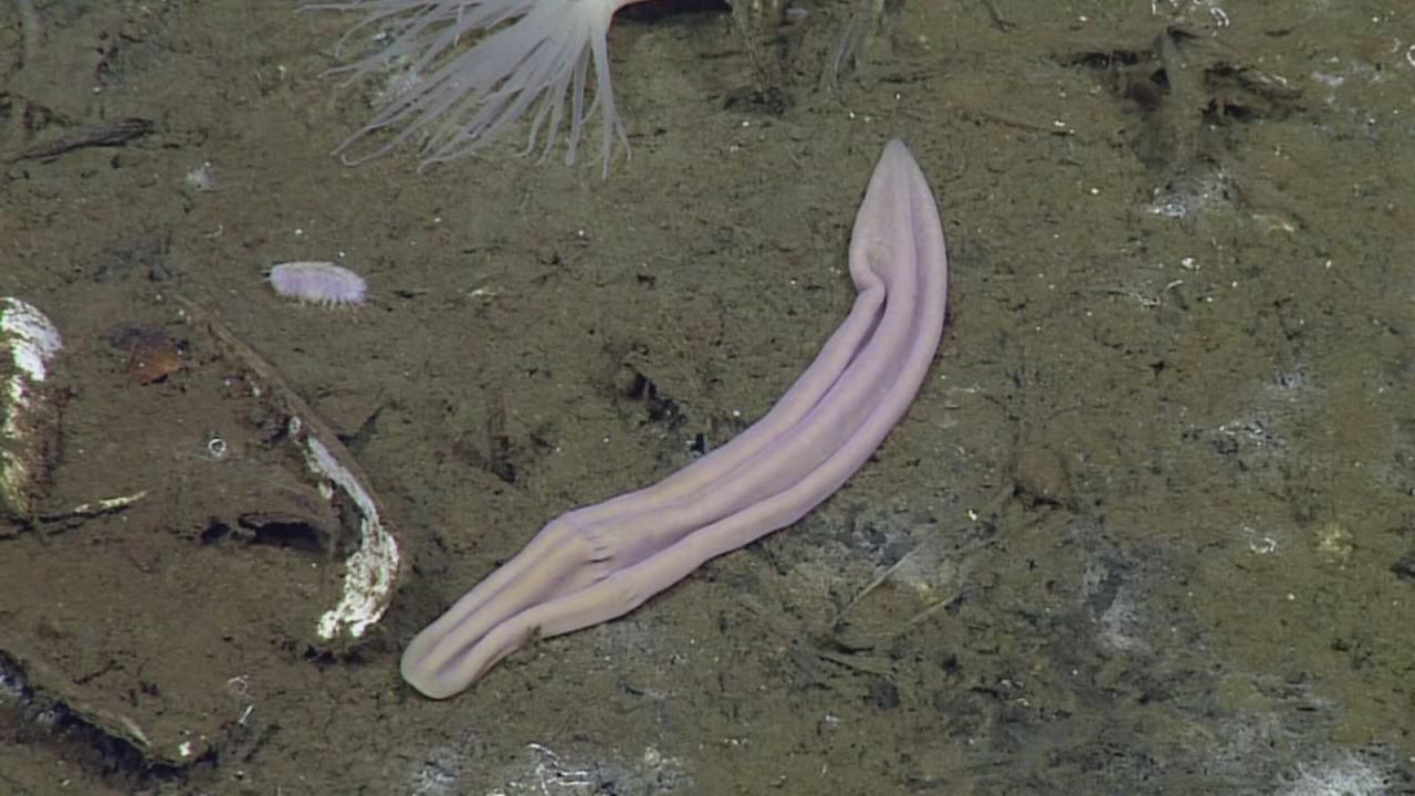 Simple sea worm discovered