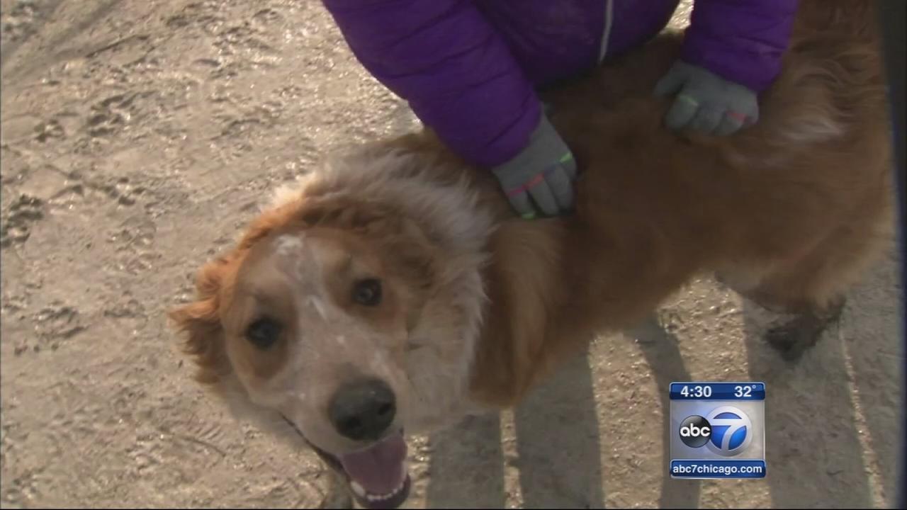 Veterinarians warn of dog flu spreading