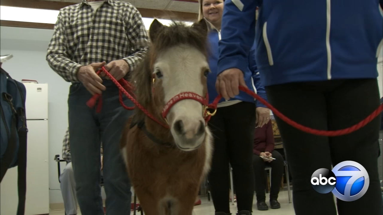 Tiny horses spread some holiday cheer at Advocate Lutheran General Hospitals off-campus Older Adult Services program in Des Plaines.