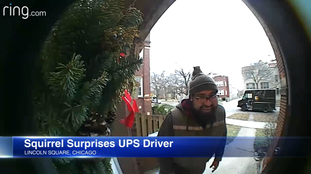 A UPS driver was caught on camera when a furry friend climbed onto his head.