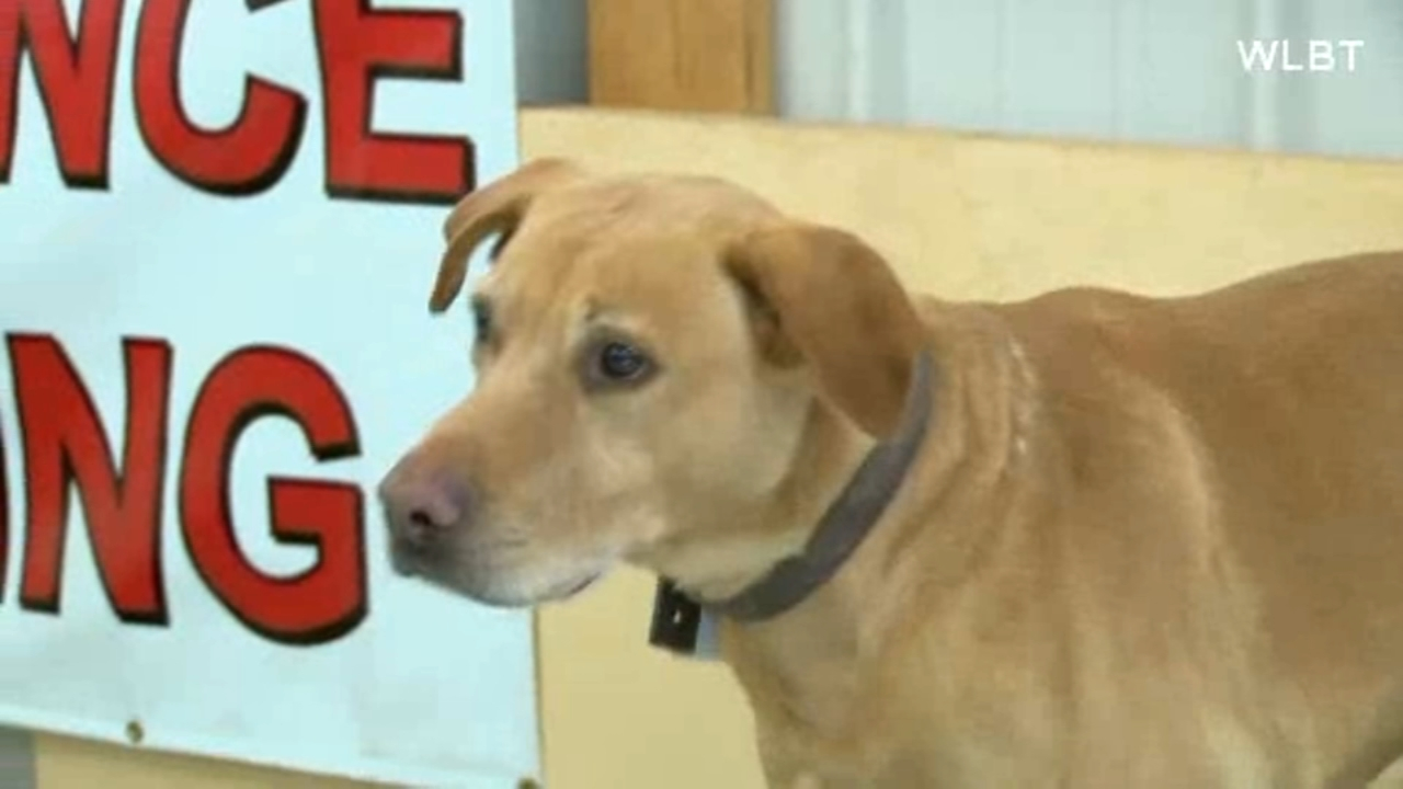 Ringo, a retired police dog, was dumped at a Mississippi animal shelter.