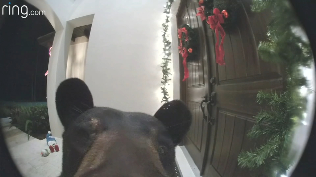 A bear was caught on a security camera as it tried to ring a Flordia familys doorbell.