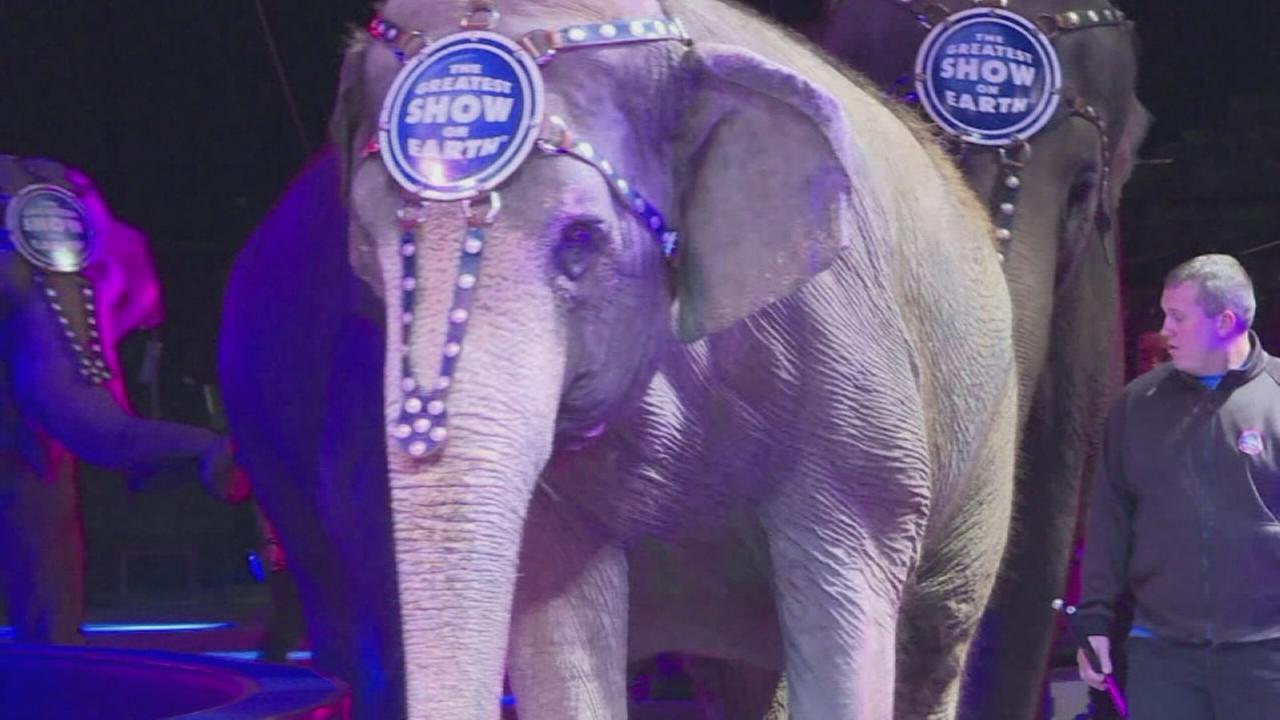 Retiring Ringling elephants