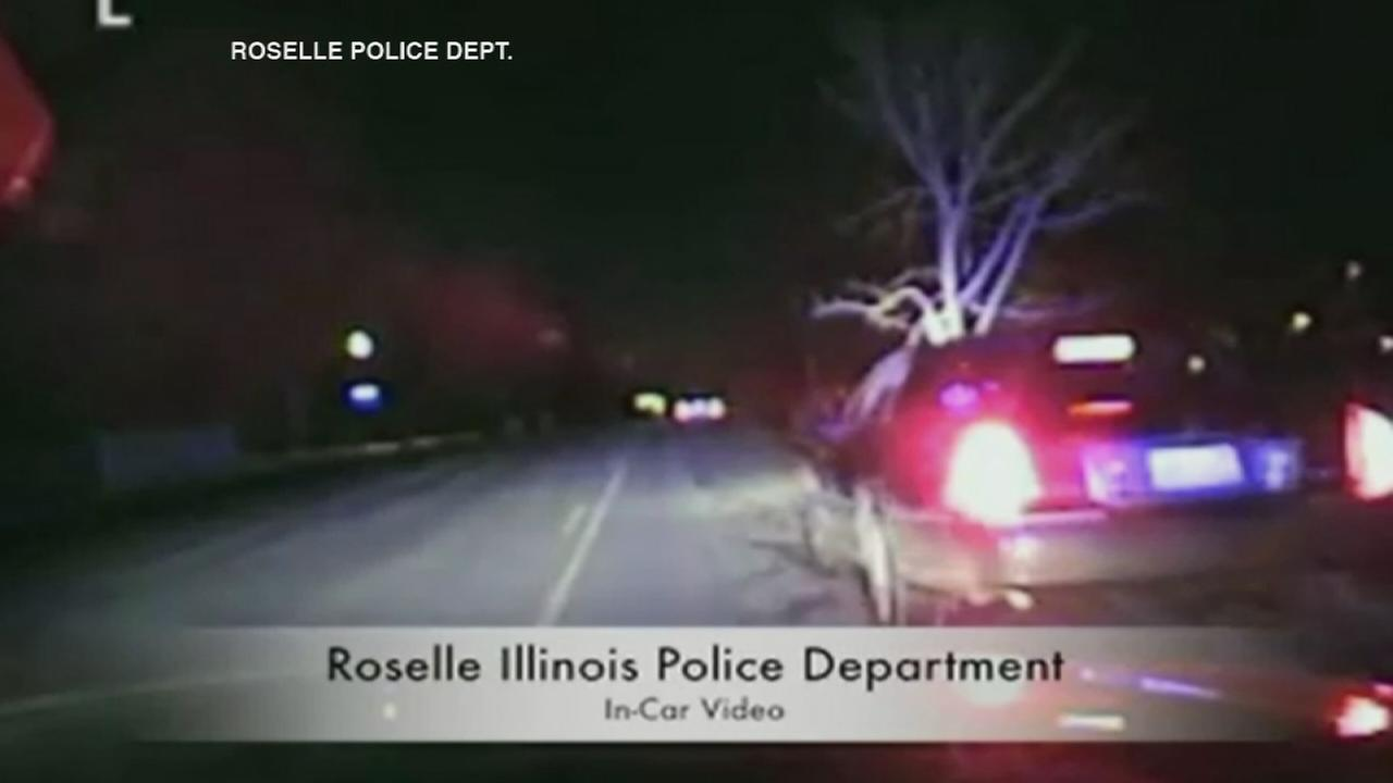 Roselle cops stop alleged DUI driver with 15-foot tree wedged in grille