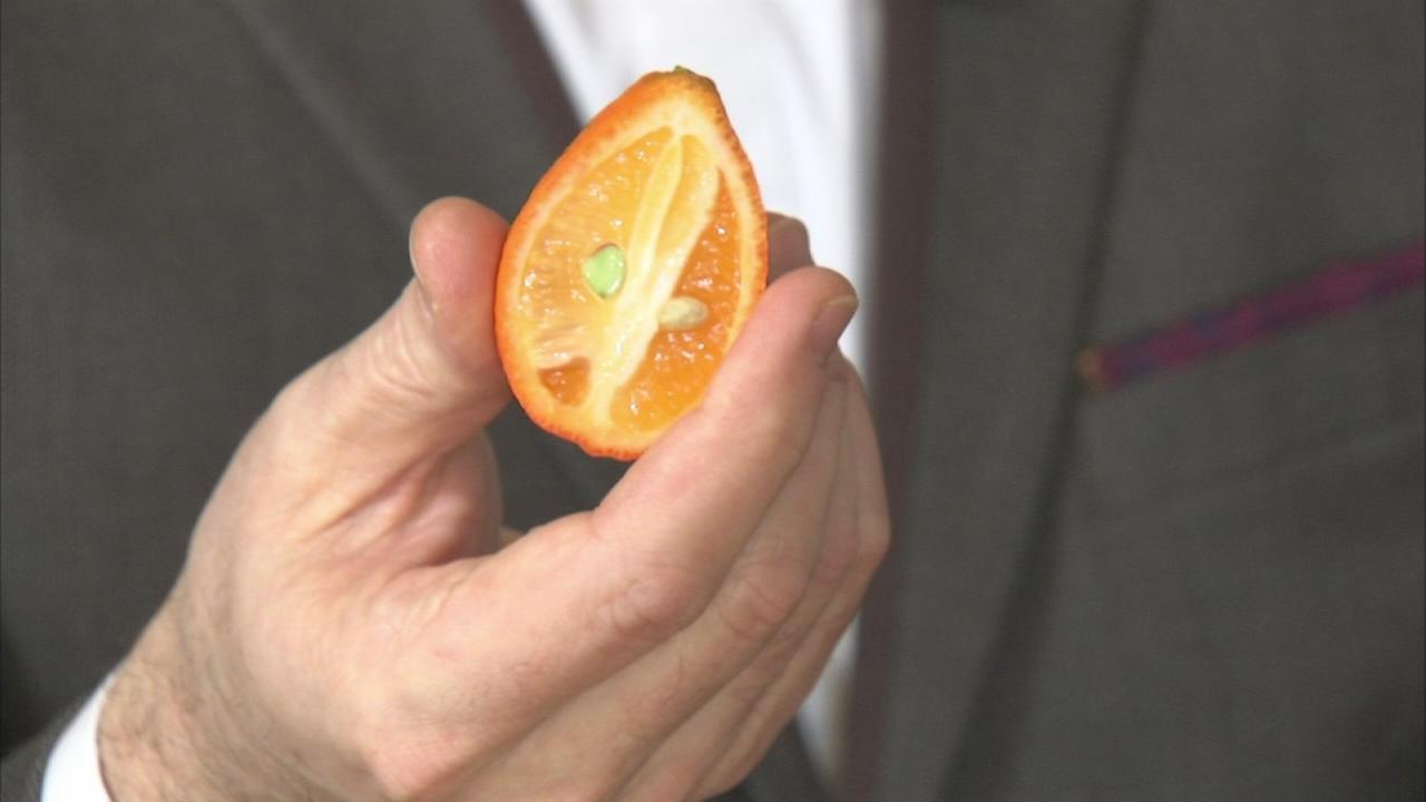Winter citrus at The Dawson