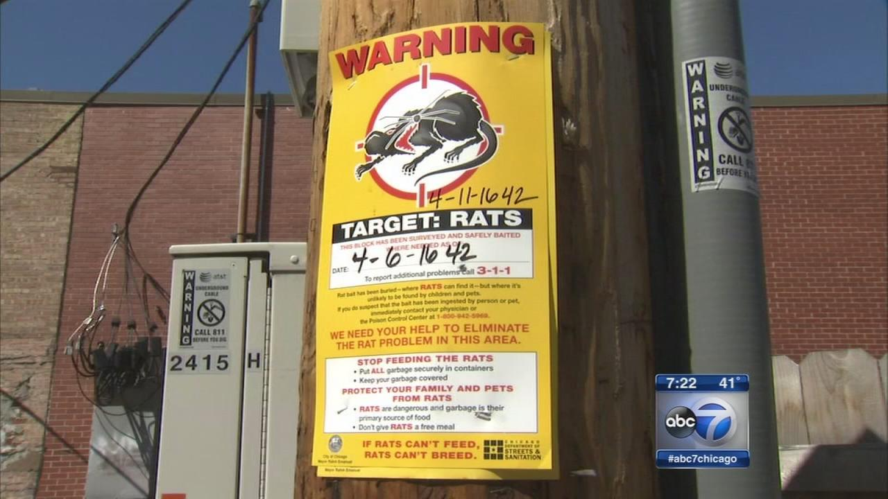 City announces new effort to curb rats
