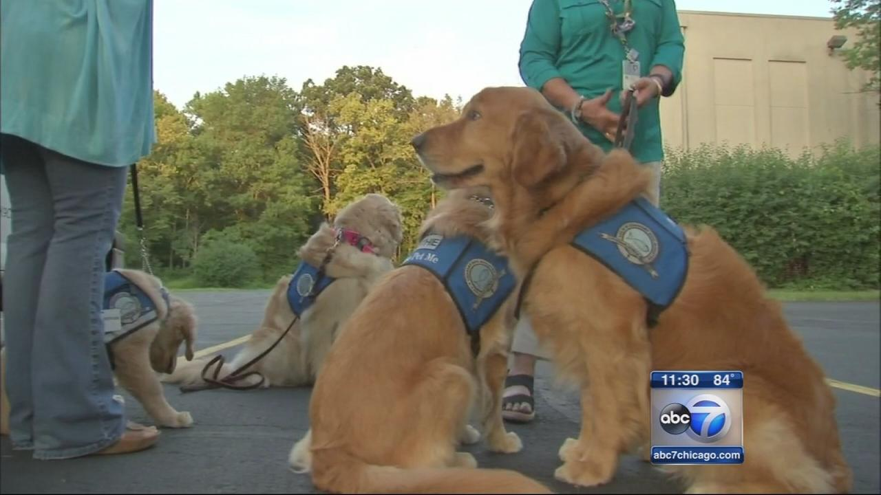 Comfort dogs headed to Dallas