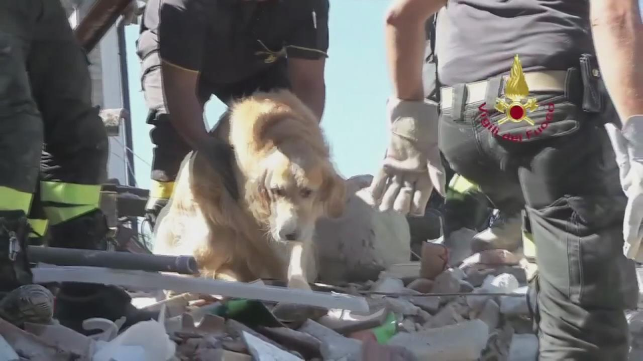 Dog rescued from rubble of Italy quake after 9 days