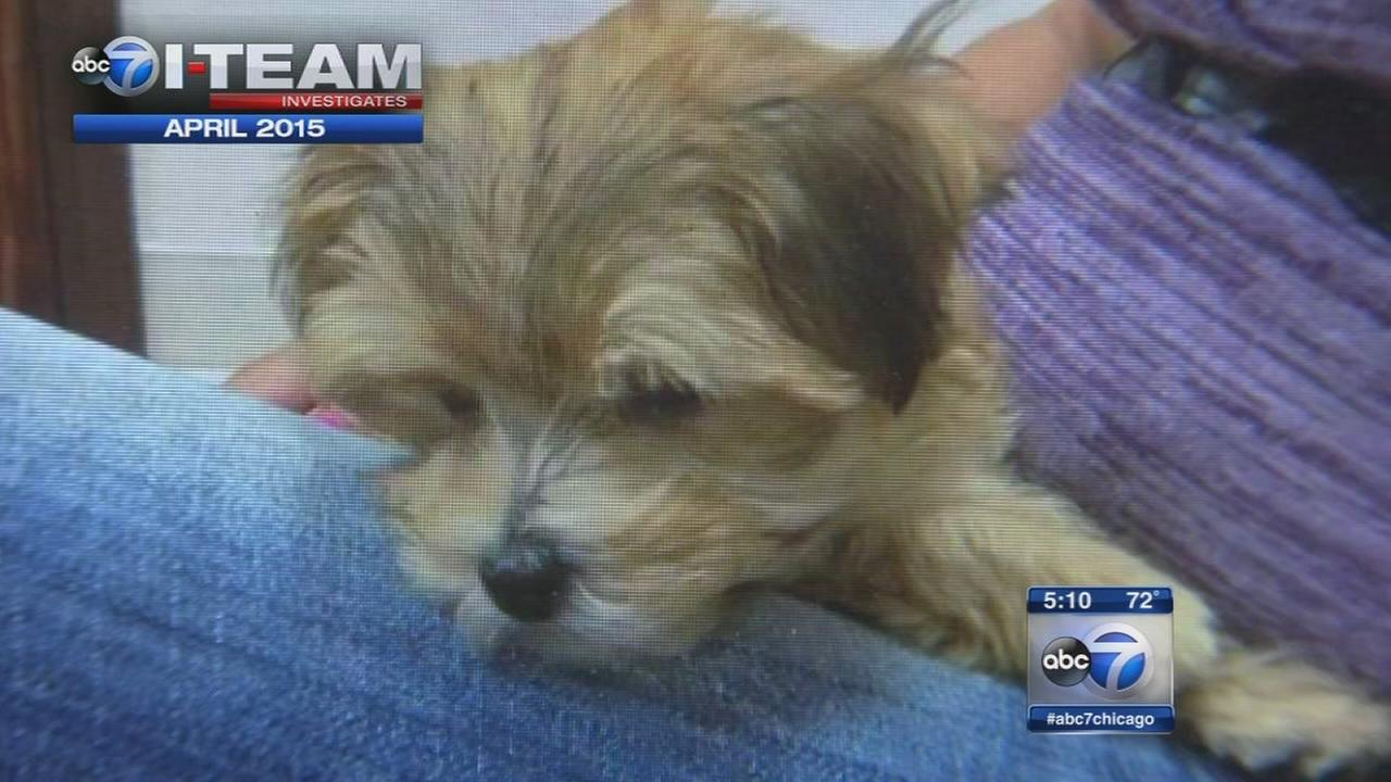 Pet store accused of selling sick puppies settles lawsuit
