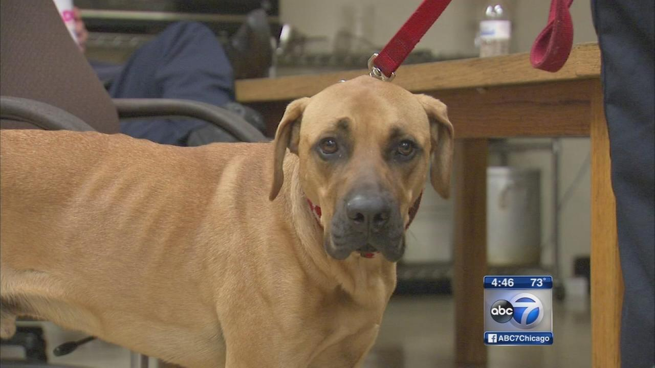 Dog reunited with Englewood firehouse