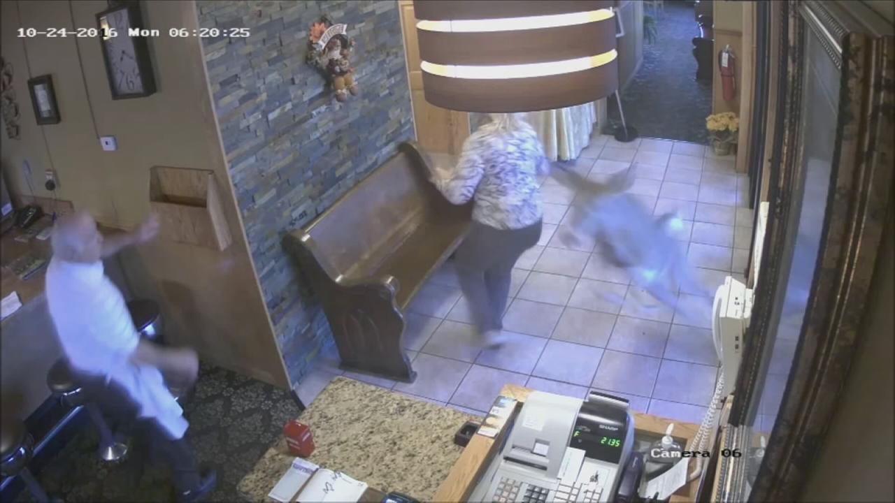 Deer crashes into Indiana diner