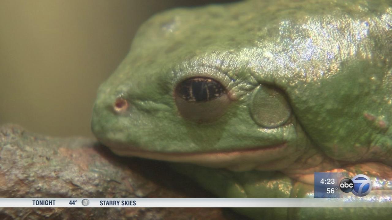 Frog exhibit hops in to Notebaert Nature Museum