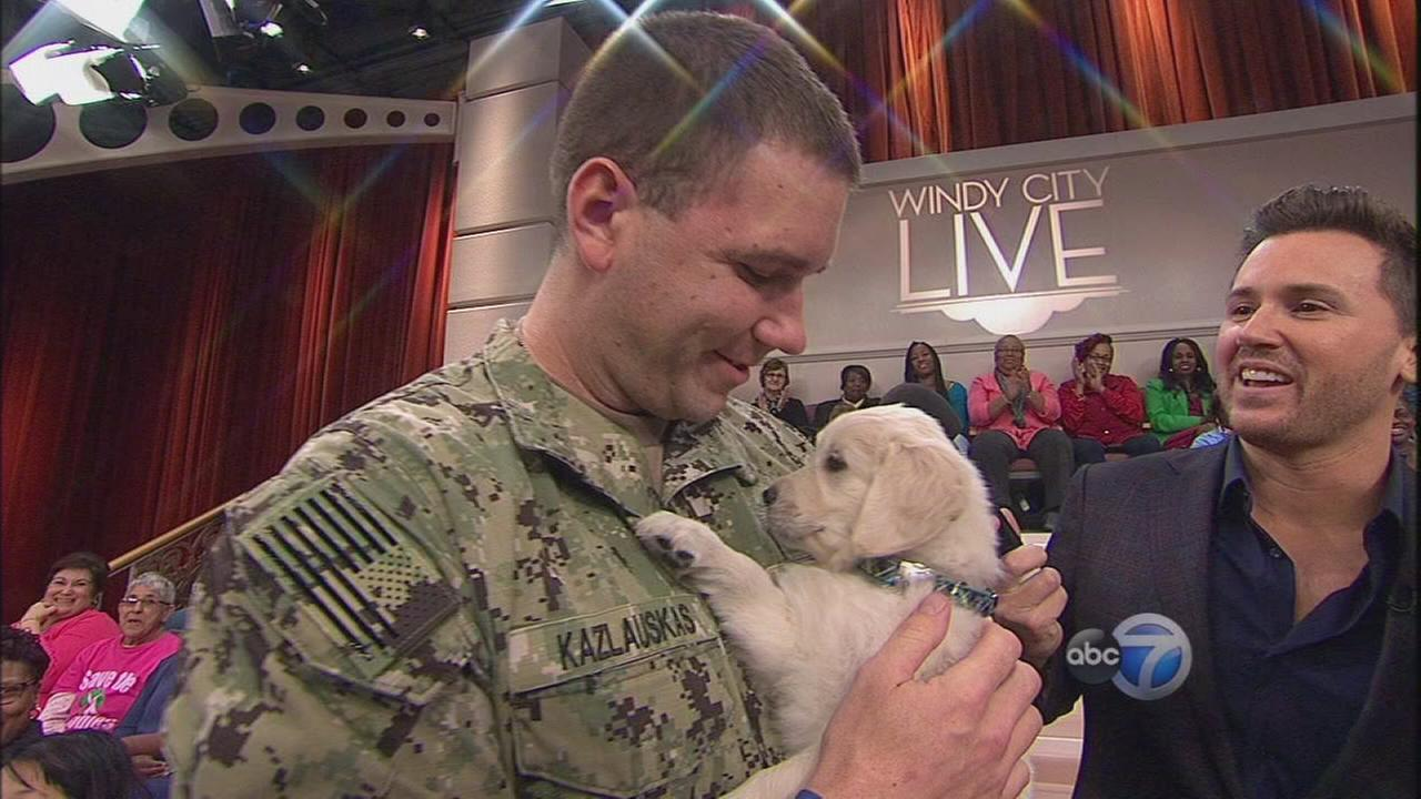 Dogs Helps Vets