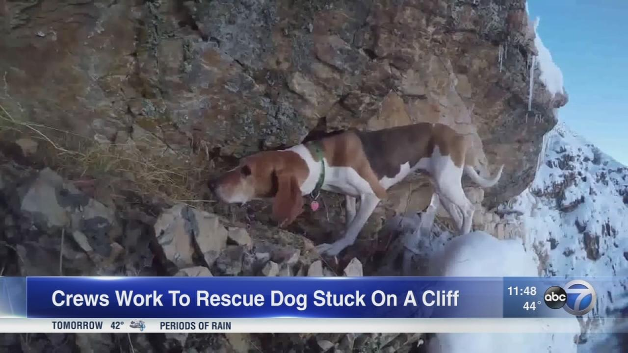 Beagle gets stuck on steep, snowy cliff
