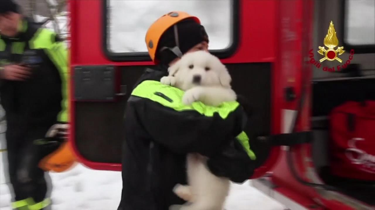 3 puppies found alive in Italy avalanche