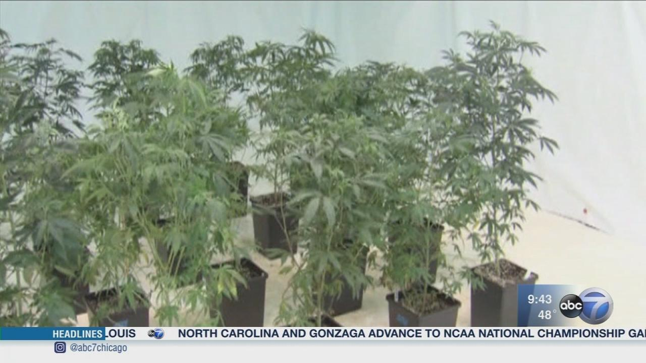 Newsviews Part 1: Legalizing marijuana in Illinois