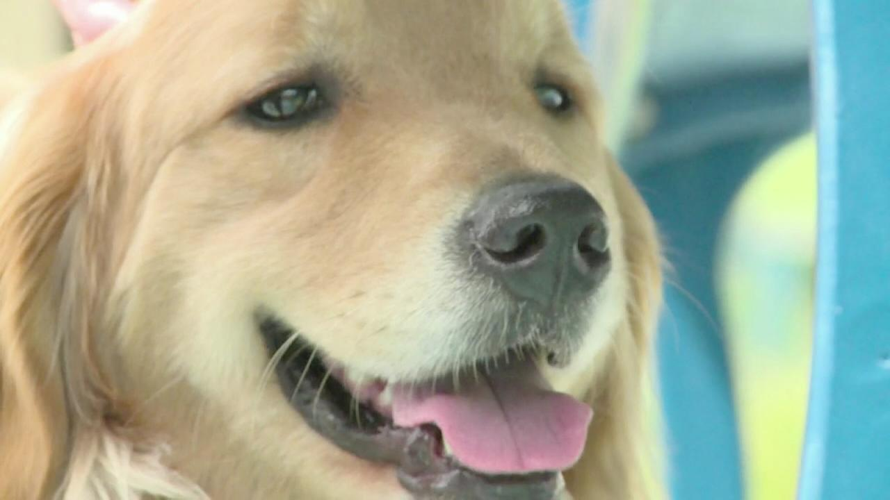 Dog named Kitty honored for putting patients at ease