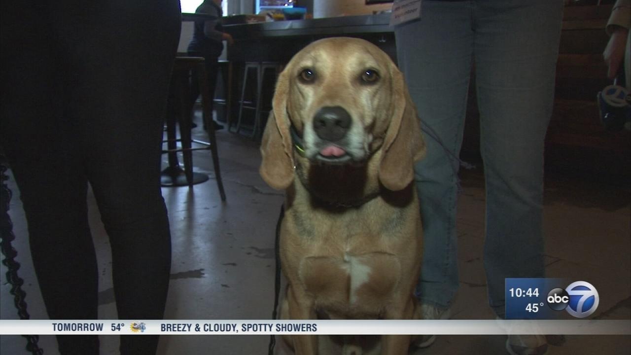 Hops, hounds event helps dogs get adopted