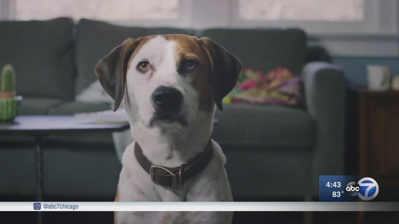 Downward Dog stars Chicago rescue canine