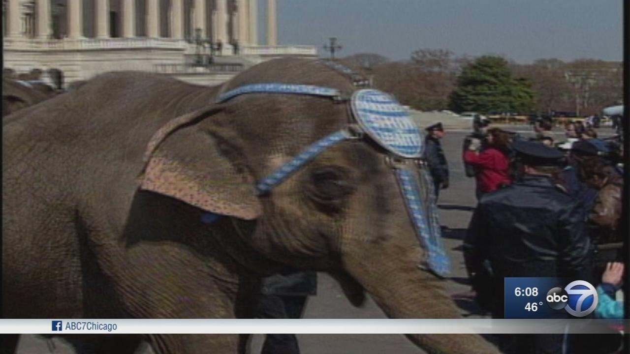 I-Team elephant reports marked beginning of end for circus