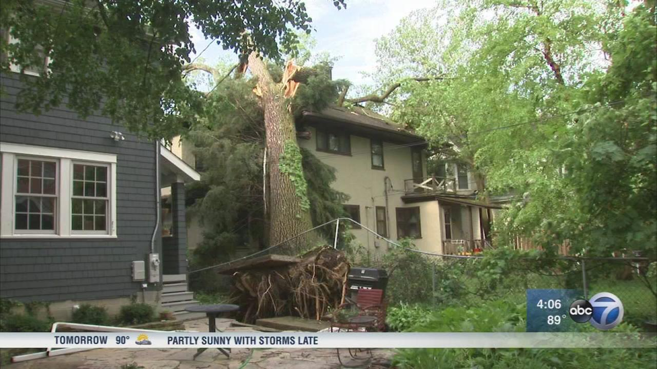 Storm downs large trees in Evanston, Wilmette