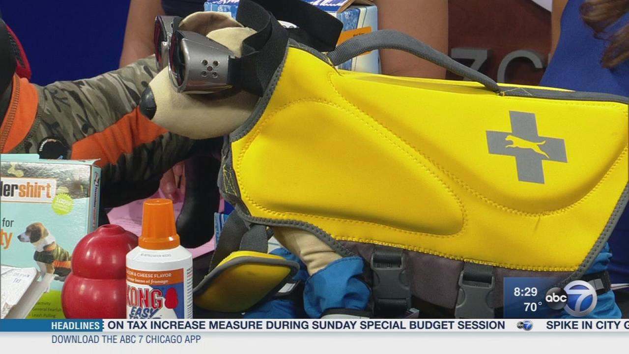 Keeping pets safe on your summer trip