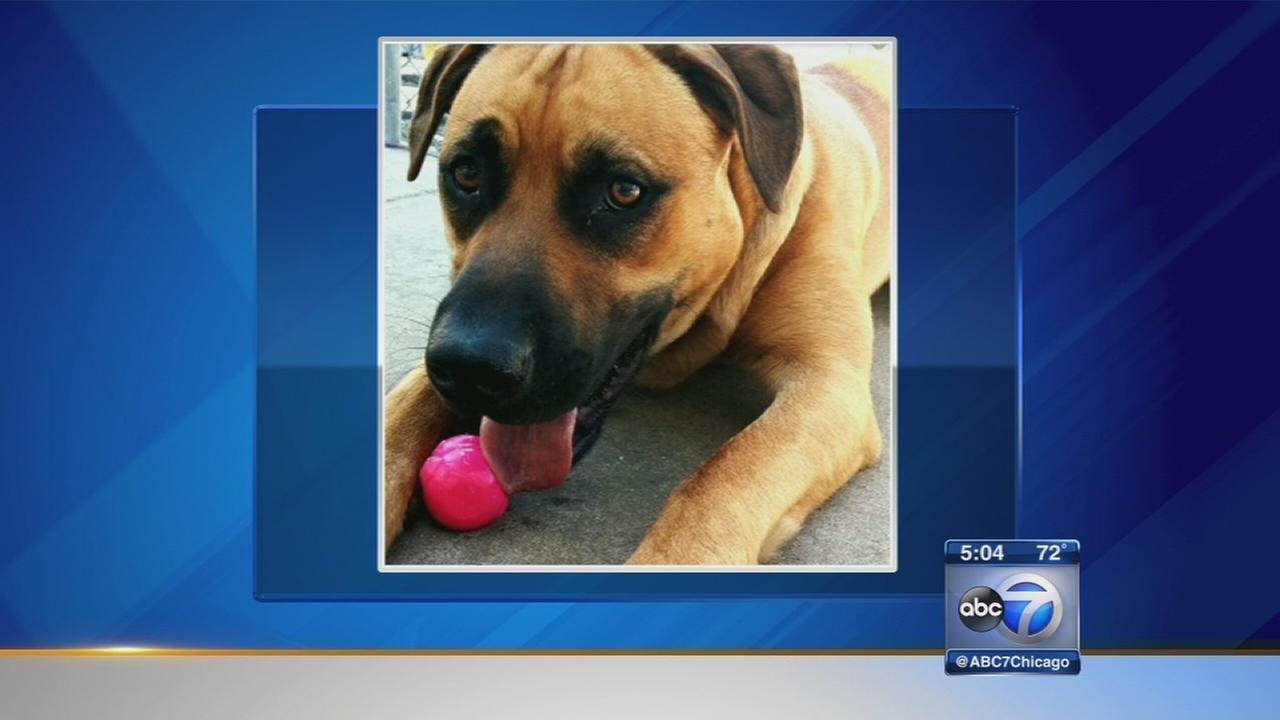 Hometown cop fired after fatally shooting dog