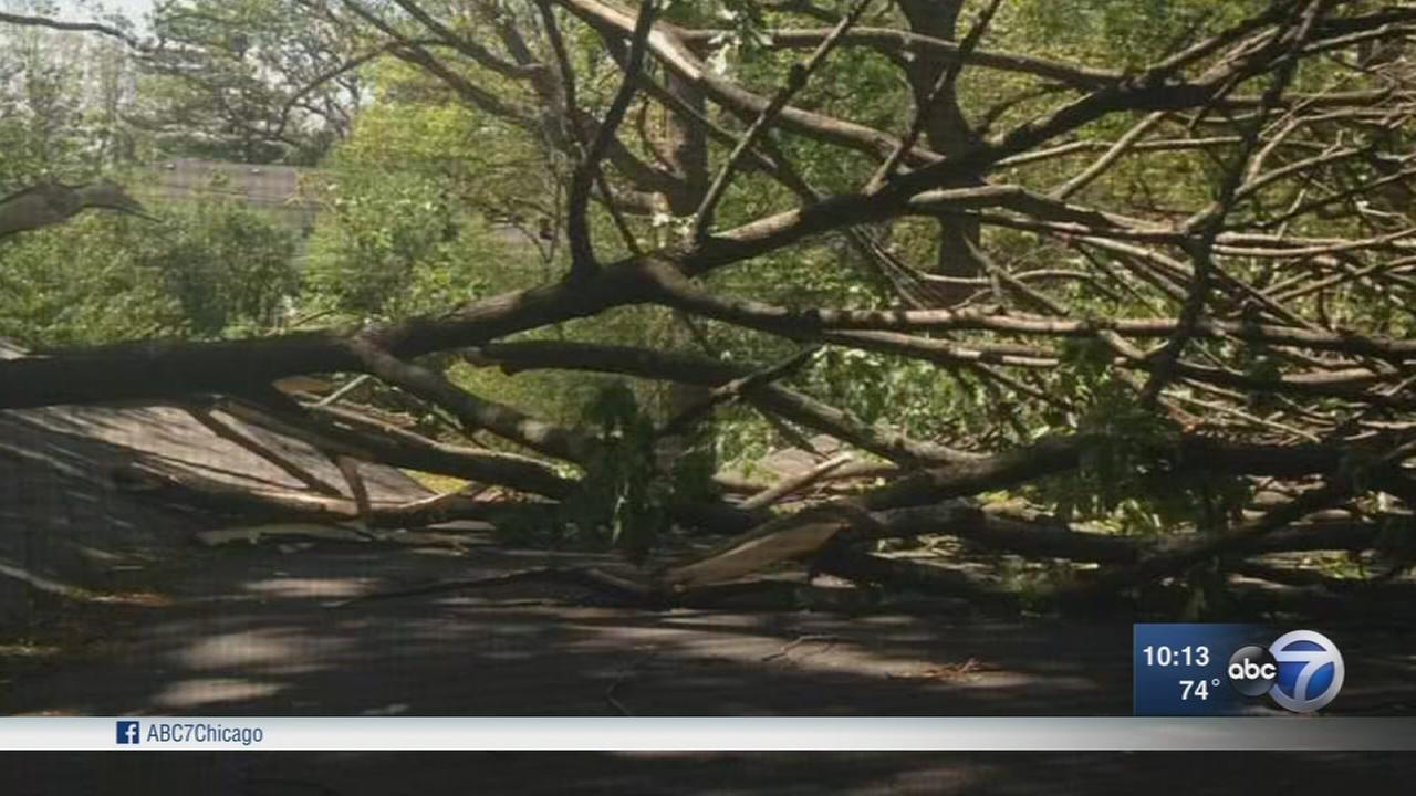 Highland Park family worries neighbors tree will damage home, city cant help