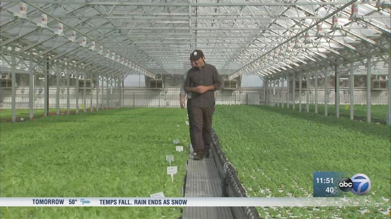 Pullman greenhouse supplies fresh produce year-round