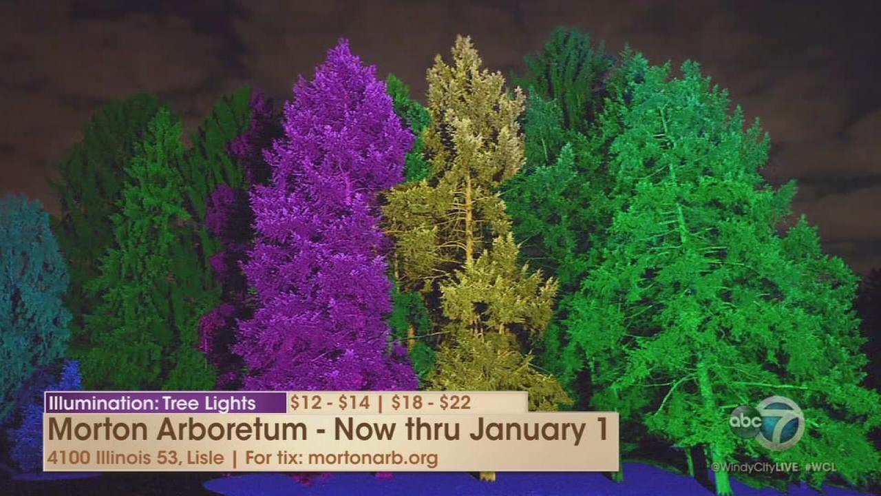 Illumination: Tree Lights at the Morton Arboretum returns