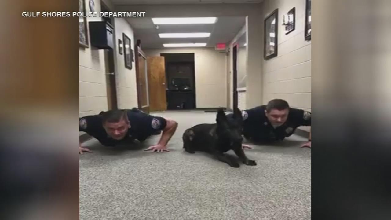 VIDEO: K9 does push-ups alongside officers